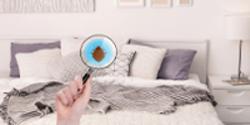 Signature Home Pest Control - Bay Area San Jose Eco Friendly Bed Bug Treatment